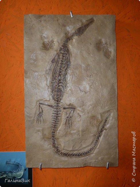 """Ну вот, и подошло время последнего алтайского фоторепортажа. """"Палеопарк"""" - это самый большой музей естественной истории в Сибири по количеству палеонтологических экспонатов. Он начал функционировать всего лишь с июля 2015 года. Музей открыл новосибирский палеонтолог Игорь Гребнев, собиравший музейные экспонаты в течение 20 лет. фото 22"""