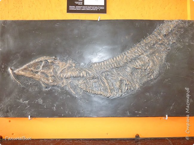 """Ну вот, и подошло время последнего алтайского фоторепортажа. """"Палеопарк"""" - это самый большой музей естественной истории в Сибири по количеству палеонтологических экспонатов. Он начал функционировать всего лишь с июля 2015 года. Музей открыл новосибирский палеонтолог Игорь Гребнев, собиравший музейные экспонаты в течение 20 лет. фото 23"""