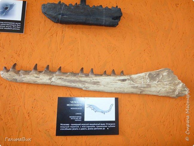 """Ну вот, и подошло время последнего алтайского фоторепортажа. """"Палеопарк"""" - это самый большой музей естественной истории в Сибири по количеству палеонтологических экспонатов. Он начал функционировать всего лишь с июля 2015 года. Музей открыл новосибирский палеонтолог Игорь Гребнев, собиравший музейные экспонаты в течение 20 лет. фото 24"""