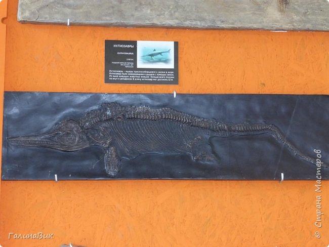 """Ну вот, и подошло время последнего алтайского фоторепортажа. """"Палеопарк"""" - это самый большой музей естественной истории в Сибири по количеству палеонтологических экспонатов. Он начал функционировать всего лишь с июля 2015 года. Музей открыл новосибирский палеонтолог Игорь Гребнев, собиравший музейные экспонаты в течение 20 лет. фото 26"""