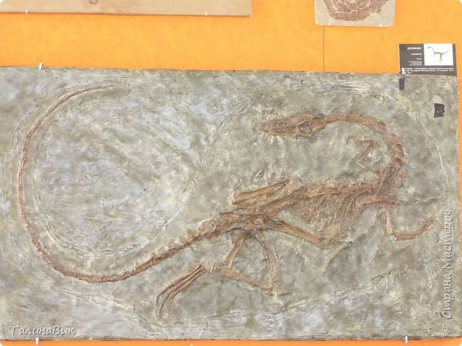 """Ну вот, и подошло время последнего алтайского фоторепортажа. """"Палеопарк"""" - это самый большой музей естественной истории в Сибири по количеству палеонтологических экспонатов. Он начал функционировать всего лишь с июля 2015 года. Музей открыл новосибирский палеонтолог Игорь Гребнев, собиравший музейные экспонаты в течение 20 лет. фото 27"""