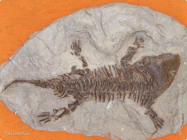 """Ну вот, и подошло время последнего алтайского фоторепортажа. """"Палеопарк"""" - это самый большой музей естественной истории в Сибири по количеству палеонтологических экспонатов. Он начал функционировать всего лишь с июля 2015 года. Музей открыл новосибирский палеонтолог Игорь Гребнев, собиравший музейные экспонаты в течение 20 лет. фото 28"""