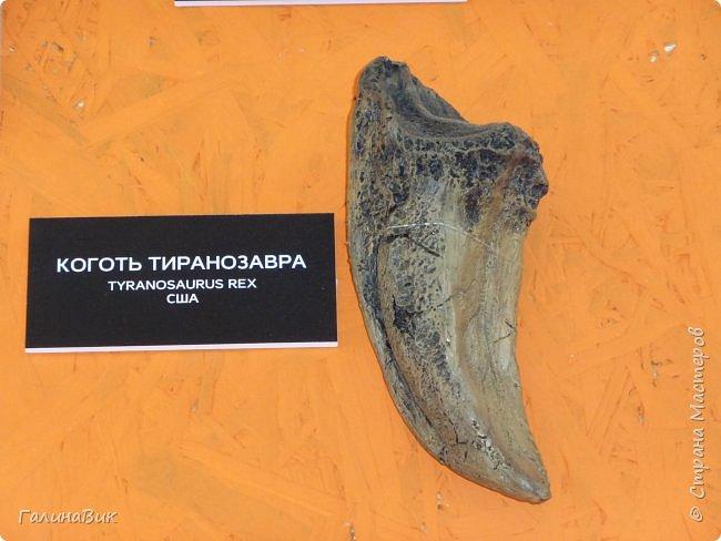 """Ну вот, и подошло время последнего алтайского фоторепортажа. """"Палеопарк"""" - это самый большой музей естественной истории в Сибири по количеству палеонтологических экспонатов. Он начал функционировать всего лишь с июля 2015 года. Музей открыл новосибирский палеонтолог Игорь Гребнев, собиравший музейные экспонаты в течение 20 лет. фото 30"""
