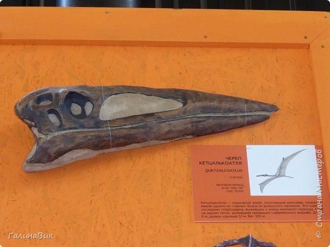 """Ну вот, и подошло время последнего алтайского фоторепортажа. """"Палеопарк"""" - это самый большой музей естественной истории в Сибири по количеству палеонтологических экспонатов. Он начал функционировать всего лишь с июля 2015 года. Музей открыл новосибирский палеонтолог Игорь Гребнев, собиравший музейные экспонаты в течение 20 лет. фото 32"""