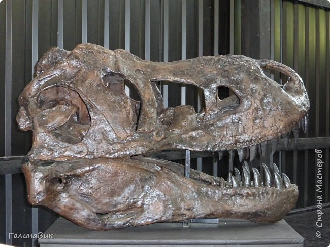 """Ну вот, и подошло время последнего алтайского фоторепортажа. """"Палеопарк"""" - это самый большой музей естественной истории в Сибири по количеству палеонтологических экспонатов. Он начал функционировать всего лишь с июля 2015 года. Музей открыл новосибирский палеонтолог Игорь Гребнев, собиравший музейные экспонаты в течение 20 лет. фото 31"""
