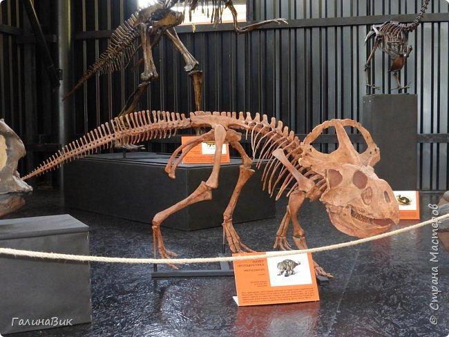 """Ну вот, и подошло время последнего алтайского фоторепортажа. """"Палеопарк"""" - это самый большой музей естественной истории в Сибири по количеству палеонтологических экспонатов. Он начал функционировать всего лишь с июля 2015 года. Музей открыл новосибирский палеонтолог Игорь Гребнев, собиравший музейные экспонаты в течение 20 лет. фото 34"""