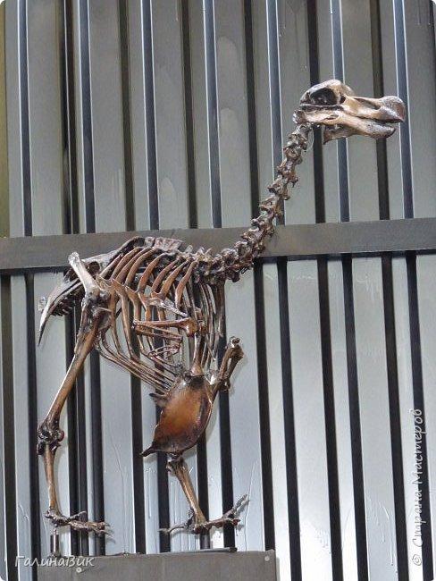 """Ну вот, и подошло время последнего алтайского фоторепортажа. """"Палеопарк"""" - это самый большой музей естественной истории в Сибири по количеству палеонтологических экспонатов. Он начал функционировать всего лишь с июля 2015 года. Музей открыл новосибирский палеонтолог Игорь Гребнев, собиравший музейные экспонаты в течение 20 лет. фото 35"""