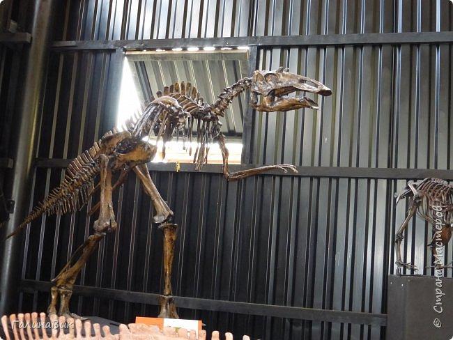 """Ну вот, и подошло время последнего алтайского фоторепортажа. """"Палеопарк"""" - это самый большой музей естественной истории в Сибири по количеству палеонтологических экспонатов. Он начал функционировать всего лишь с июля 2015 года. Музей открыл новосибирский палеонтолог Игорь Гребнев, собиравший музейные экспонаты в течение 20 лет. фото 36"""