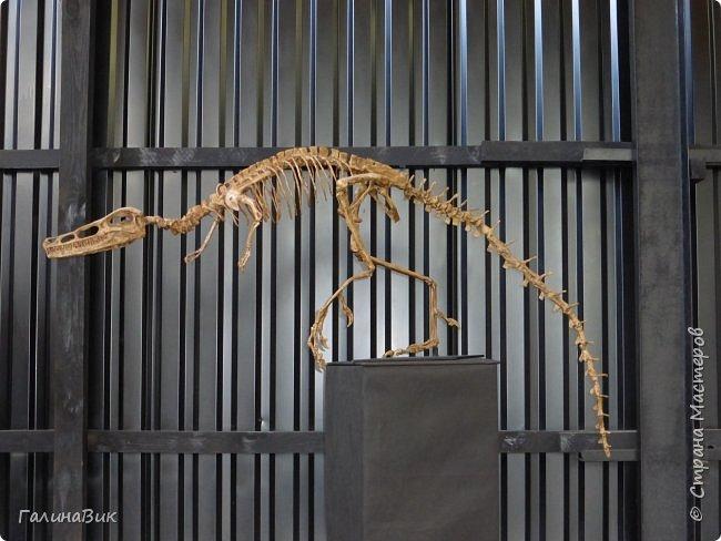 """Ну вот, и подошло время последнего алтайского фоторепортажа. """"Палеопарк"""" - это самый большой музей естественной истории в Сибири по количеству палеонтологических экспонатов. Он начал функционировать всего лишь с июля 2015 года. Музей открыл новосибирский палеонтолог Игорь Гребнев, собиравший музейные экспонаты в течение 20 лет. фото 37"""