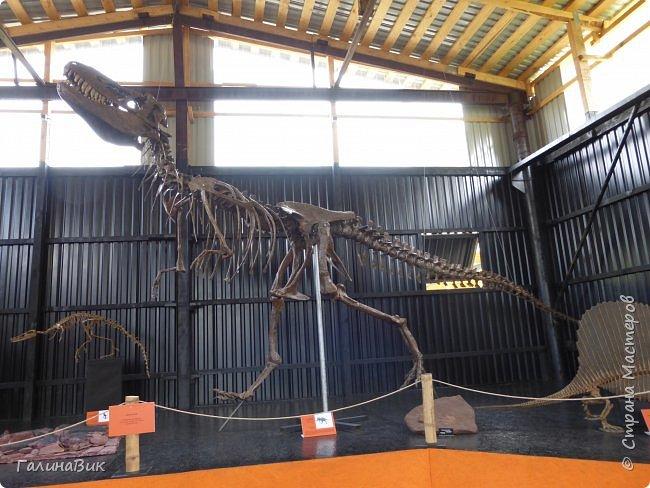 """Ну вот, и подошло время последнего алтайского фоторепортажа. """"Палеопарк"""" - это самый большой музей естественной истории в Сибири по количеству палеонтологических экспонатов. Он начал функционировать всего лишь с июля 2015 года. Музей открыл новосибирский палеонтолог Игорь Гребнев, собиравший музейные экспонаты в течение 20 лет. фото 38"""