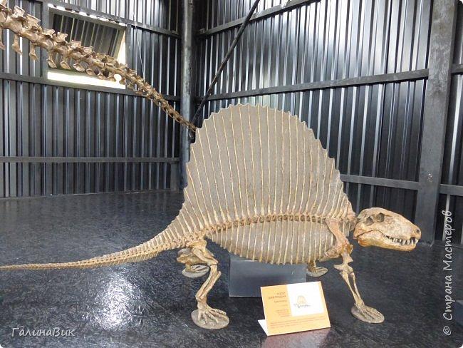 """Ну вот, и подошло время последнего алтайского фоторепортажа. """"Палеопарк"""" - это самый большой музей естественной истории в Сибири по количеству палеонтологических экспонатов. Он начал функционировать всего лишь с июля 2015 года. Музей открыл новосибирский палеонтолог Игорь Гребнев, собиравший музейные экспонаты в течение 20 лет. фото 39"""