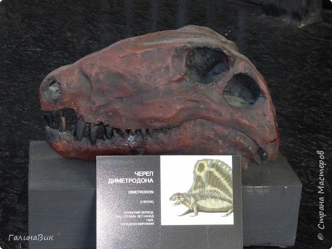"""Ну вот, и подошло время последнего алтайского фоторепортажа. """"Палеопарк"""" - это самый большой музей естественной истории в Сибири по количеству палеонтологических экспонатов. Он начал функционировать всего лишь с июля 2015 года. Музей открыл новосибирский палеонтолог Игорь Гребнев, собиравший музейные экспонаты в течение 20 лет. фото 40"""