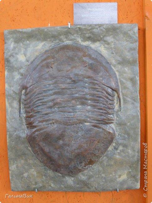 """Ну вот, и подошло время последнего алтайского фоторепортажа. """"Палеопарк"""" - это самый большой музей естественной истории в Сибири по количеству палеонтологических экспонатов. Он начал функционировать всего лишь с июля 2015 года. Музей открыл новосибирский палеонтолог Игорь Гребнев, собиравший музейные экспонаты в течение 20 лет. фото 42"""