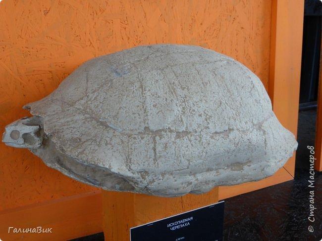 """Ну вот, и подошло время последнего алтайского фоторепортажа. """"Палеопарк"""" - это самый большой музей естественной истории в Сибири по количеству палеонтологических экспонатов. Он начал функционировать всего лишь с июля 2015 года. Музей открыл новосибирский палеонтолог Игорь Гребнев, собиравший музейные экспонаты в течение 20 лет. фото 44"""