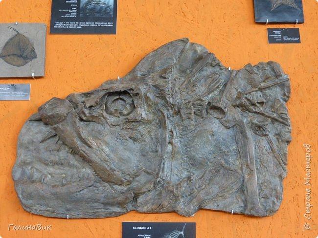 """Ну вот, и подошло время последнего алтайского фоторепортажа. """"Палеопарк"""" - это самый большой музей естественной истории в Сибири по количеству палеонтологических экспонатов. Он начал функционировать всего лишь с июля 2015 года. Музей открыл новосибирский палеонтолог Игорь Гребнев, собиравший музейные экспонаты в течение 20 лет. фото 47"""