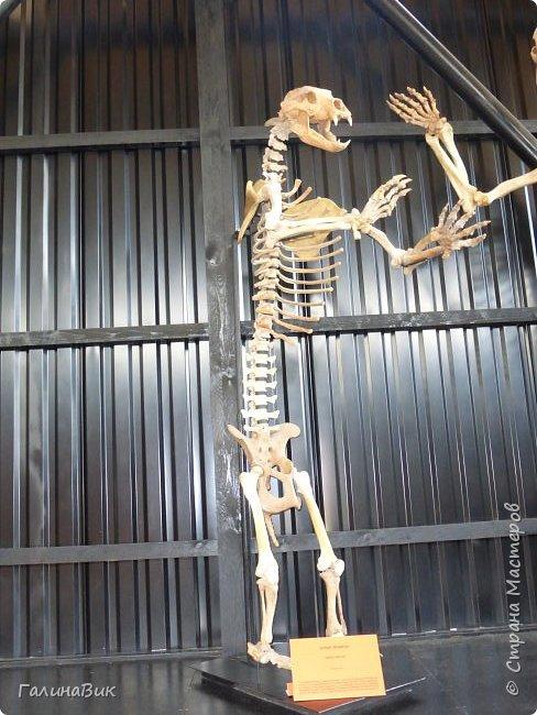 """Ну вот, и подошло время последнего алтайского фоторепортажа. """"Палеопарк"""" - это самый большой музей естественной истории в Сибири по количеству палеонтологических экспонатов. Он начал функционировать всего лишь с июля 2015 года. Музей открыл новосибирский палеонтолог Игорь Гребнев, собиравший музейные экспонаты в течение 20 лет. фото 48"""