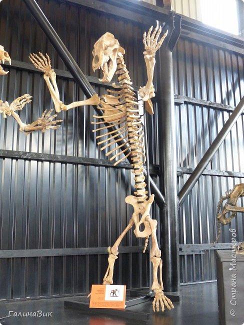 """Ну вот, и подошло время последнего алтайского фоторепортажа. """"Палеопарк"""" - это самый большой музей естественной истории в Сибири по количеству палеонтологических экспонатов. Он начал функционировать всего лишь с июля 2015 года. Музей открыл новосибирский палеонтолог Игорь Гребнев, собиравший музейные экспонаты в течение 20 лет. фото 50"""