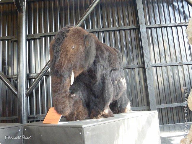 """Ну вот, и подошло время последнего алтайского фоторепортажа. """"Палеопарк"""" - это самый большой музей естественной истории в Сибири по количеству палеонтологических экспонатов. Он начал функционировать всего лишь с июля 2015 года. Музей открыл новосибирский палеонтолог Игорь Гребнев, собиравший музейные экспонаты в течение 20 лет. фото 55"""