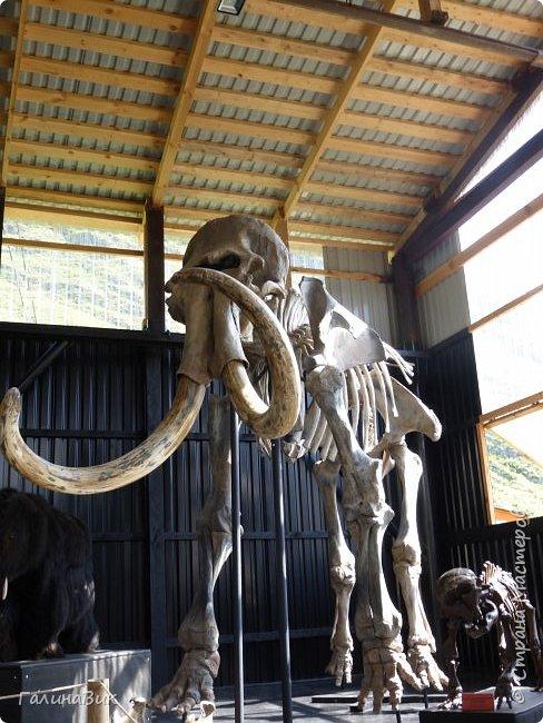 """Ну вот, и подошло время последнего алтайского фоторепортажа. """"Палеопарк"""" - это самый большой музей естественной истории в Сибири по количеству палеонтологических экспонатов. Он начал функционировать всего лишь с июля 2015 года. Музей открыл новосибирский палеонтолог Игорь Гребнев, собиравший музейные экспонаты в течение 20 лет. фото 57"""