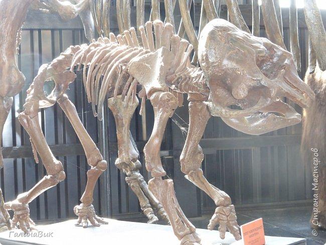 """Ну вот, и подошло время последнего алтайского фоторепортажа. """"Палеопарк"""" - это самый большой музей естественной истории в Сибири по количеству палеонтологических экспонатов. Он начал функционировать всего лишь с июля 2015 года. Музей открыл новосибирский палеонтолог Игорь Гребнев, собиравший музейные экспонаты в течение 20 лет. фото 56"""