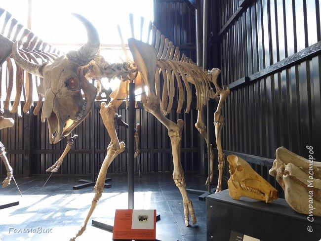 """Ну вот, и подошло время последнего алтайского фоторепортажа. """"Палеопарк"""" - это самый большой музей естественной истории в Сибири по количеству палеонтологических экспонатов. Он начал функционировать всего лишь с июля 2015 года. Музей открыл новосибирский палеонтолог Игорь Гребнев, собиравший музейные экспонаты в течение 20 лет. фото 60"""