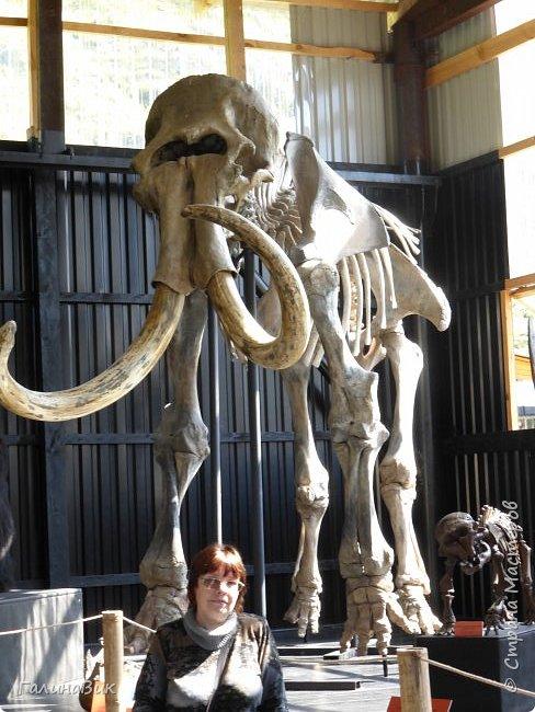 """Ну вот, и подошло время последнего алтайского фоторепортажа. """"Палеопарк"""" - это самый большой музей естественной истории в Сибири по количеству палеонтологических экспонатов. Он начал функционировать всего лишь с июля 2015 года. Музей открыл новосибирский палеонтолог Игорь Гребнев, собиравший музейные экспонаты в течение 20 лет. фото 64"""