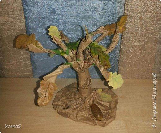 Бумажный дуб