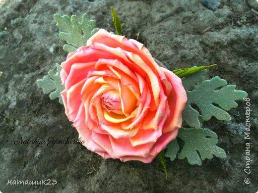 Роза Глория с листьями цинерарии, выкройки цинерарии с живых листочков(резинка) фото 1