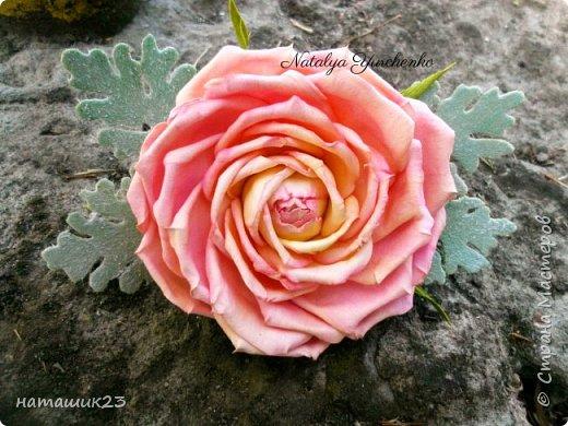 Роза Глория с листьями цинерарии, выкройки цинерарии с живых листочков(резинка) фото 2