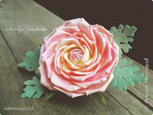 Роза Глория с листьями цинерарии, выкройки цинерарии с живых листочков(резинка) фото 3