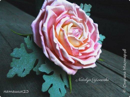 Роза Глория с листьями цинерарии, выкройки цинерарии с живых листочков(резинка) фото 4