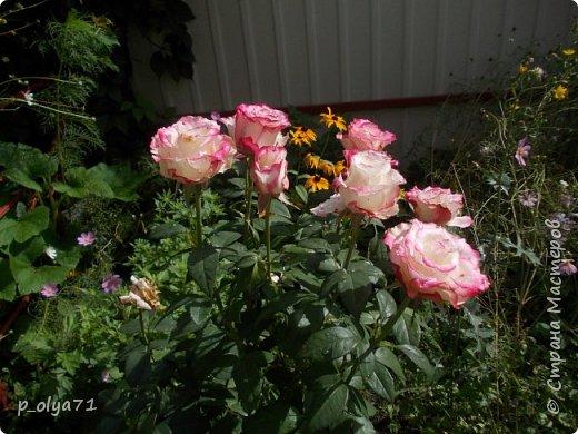 Здравствуйте!!!  Каждое время года хорошо по-своему.. Лето радует нас пестротой, разнообразием красок.. Вот я и любуюсь,любуюсь и любуюсь!..))) Хочу и с вами поделиться частичкой красоты,которую нам дарит природа!  Спасибо ей! фото 50