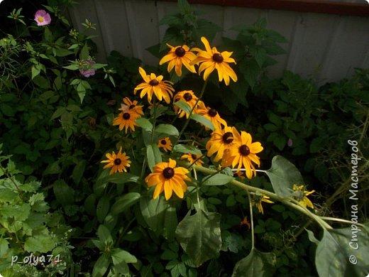 Здравствуйте!!!  Каждое время года хорошо по-своему.. Лето радует нас пестротой, разнообразием красок.. Вот я и любуюсь,любуюсь и любуюсь!..))) Хочу и с вами поделиться частичкой красоты,которую нам дарит природа!  Спасибо ей! фото 49