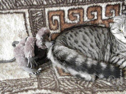 Знакомьтесь - крыс по имени Пасюк! :) Моя первая игрушка, выполненная в смешанной технике - голова и лапы из полимерной глины, туловище из искусственного меха. фото 40