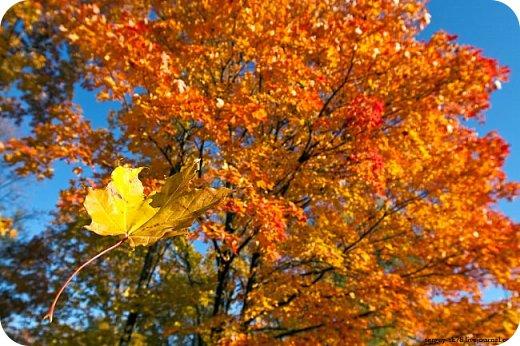 А.С.Пушкин почему-то любил ноябрь. Видимо, этот месяц года был ему духовно близким. Я не А.С.Пушкин. Поэтому свою работу посвящаю сентябрю. Месяцу обильного листопада. Когда ветер в ритме вальса играючи кружит опавшую ароматную листву. фото 3