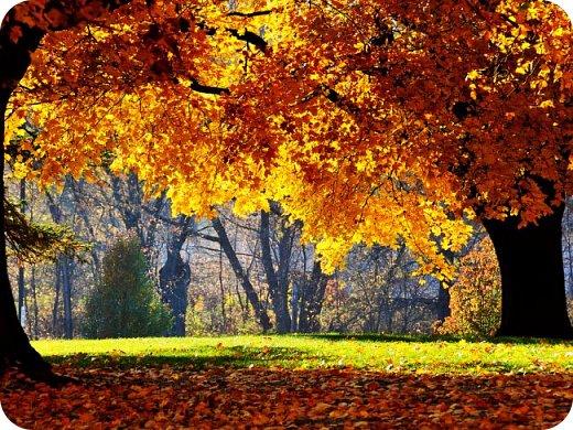 А.С.Пушкин почему-то любил ноябрь. Видимо, этот месяц года был ему духовно близким. Я не А.С.Пушкин. Поэтому свою работу посвящаю сентябрю. Месяцу обильного листопада. Когда ветер в ритме вальса играючи кружит опавшую ароматную листву. фото 9
