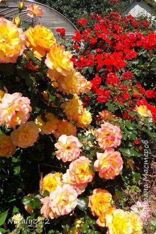 Чем же порадовать любимый сад? Почему бы не новыми малыми архитектурными формами?! Это пень - добрый дух нашего сада. фото 36
