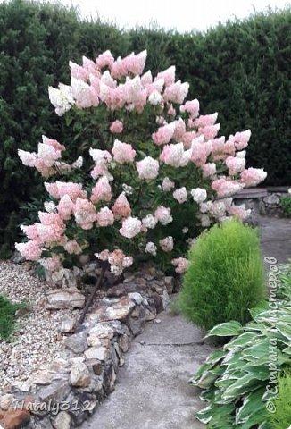 Чем же порадовать любимый сад? Почему бы не новыми малыми архитектурными формами?! Это пень - добрый дух нашего сада. фото 37