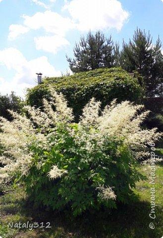 Чем же порадовать любимый сад? Почему бы не новыми малыми архитектурными формами?! Это пень - добрый дух нашего сада. фото 38
