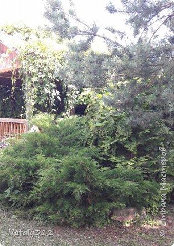 Чем же порадовать любимый сад? Почему бы не новыми малыми архитектурными формами?! Это пень - добрый дух нашего сада. фото 39