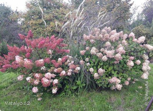 Чем же порадовать любимый сад? Почему бы не новыми малыми архитектурными формами?! Это пень - добрый дух нашего сада. фото 40
