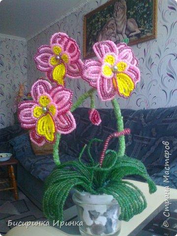 Доброго времени суток всем! Хочу поделиться своими свеженькими цветочками .Приятного просмотра! фото 1