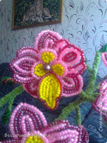 Доброго времени суток всем! Хочу поделиться своими свеженькими цветочками .Приятного просмотра! фото 2