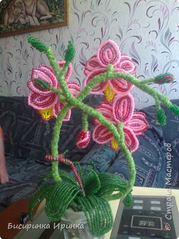 Доброго времени суток всем! Хочу поделиться своими свеженькими цветочками .Приятного просмотра! фото 3