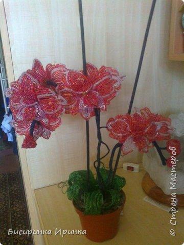 Доброго времени суток всем! Хочу поделиться своими свеженькими цветочками .Приятного просмотра! фото 5