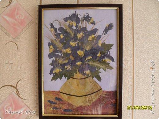 """Здравствуйте, дорогие соседи! Моим первым хобби (не считая кулинарии) была ошибана - создание картин и панно из сухих растений. Сейчас к этому виду искусства я несколько охладела, может, еще вернусь к этому занятию - осталась еще целая коробка засушенных цветов и листьев, но пока меня захватил декор бутылок и точечная роспись. Решила поделиться с вами своими скромными ошибанками, сделанными несколько лет назад, с кучей ошибок, но с частичкой моей души. Во всех работах краски использовались только для создания фона. Работы выкладываю по хронологии создания. Итак, """"Аквилегия в вазе"""". Использованы: аквилегия, листья каких-то растений, фон гуашь. фото 1"""