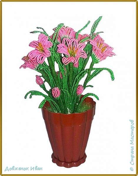 """Зиферантес .  На создания этого цветка вдохновила начала фото настоящего цветка ( предоставлено ниже в конце ), а потом уже окончательно эта работа - http://stranamasterov.ru/node/995686?c=favorite . Спасибо большое """" Мила Ло """" - за помощь в создании  фото 1"""