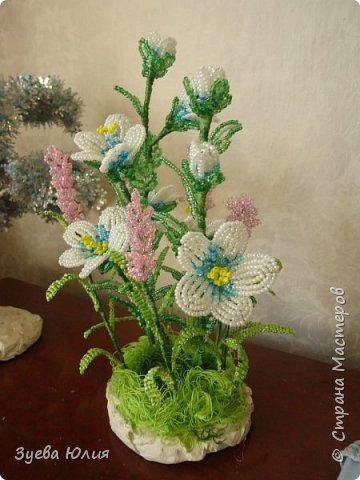Полевые цветочки) фото 1