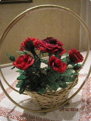 Мои розы фото 1