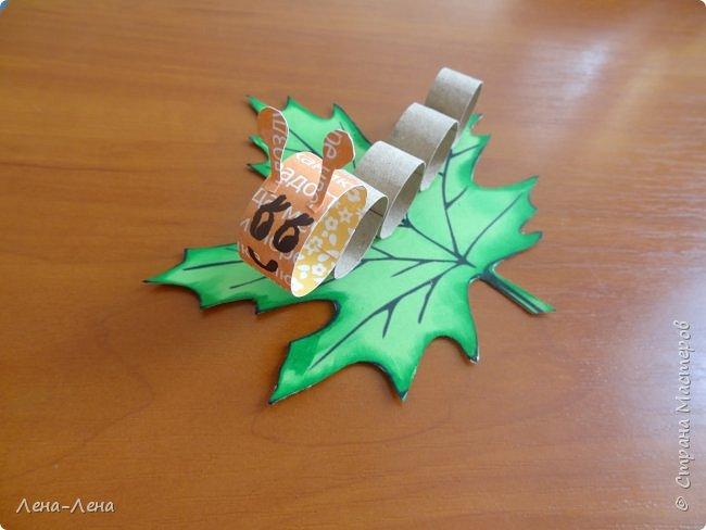 Весёлые гусенички фото 2